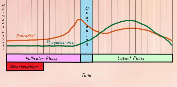 Cum vă afectează hormonii silueta. Partea 1: estrogen